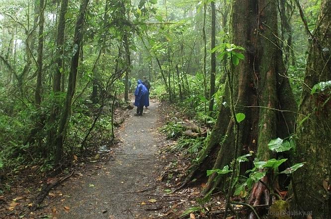 CR_NP_Tenorio_trail