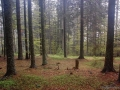 MM_Wald_small